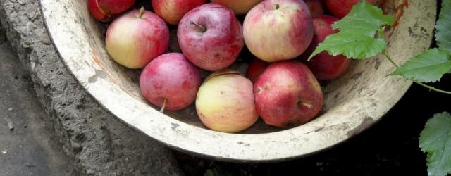 apples-182792_1920-848x400